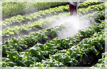 農薬、肥料を減らすことができる