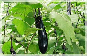 農業の収益性・作物の収穫量のアップ